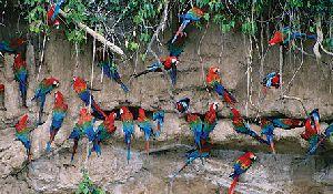 Parc National du Manú / Zone Réservée 7J