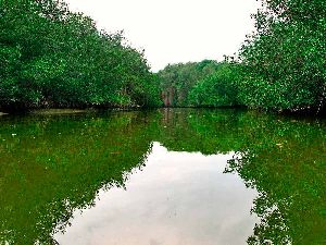 Tumbes Mangroves